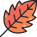 leaf, tree, forest, camping, leave