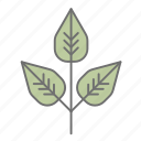 green, leaf, leaves, nature, outdoors, poison ivy, recreation icon
