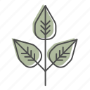 camping, hiking, leaves, nature, outdoors, poison ivy, recreation icon