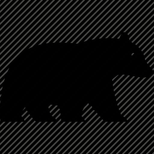 animal, bear, black bear, forest, national park, predator, wildlife icon