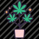 cannabis, marijuana, plant, leaves, drug, growth