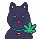cat, cannabis, marijuana, plant, drug, catnip, drunk