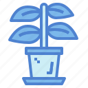 botanical, dry, nature, plant icon