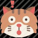 animal, cat, emoji, emotion, feeling, pet, surprised