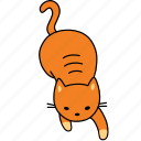 animal, cat, feline, ginger, orange, pet, play