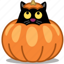 animal, cat, halloween, hide, jack o lantern, kitty, pet, pumpkin, spooky icon