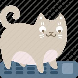 accounting, calculator, cat, math icon
