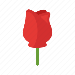 beauty, flower, nature, red, rose, roses, single icon