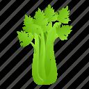 celery, food, fresh, leaf, nature, retro icon