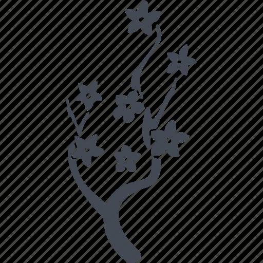 branches, china, flowers, sakura icon
