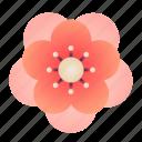 plum, blossom, chinese, flower, peach, newyear
