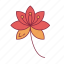 blossom, celebration, chinese, festival, new year, traditional