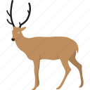 cartoon reindeer, christmas reindeer, funny deer, funny reindeer icon