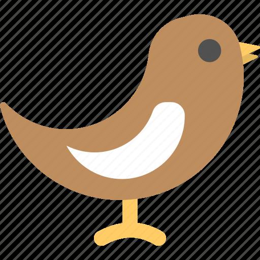 bird, christmas sparrow, dove, robin, songbird icon