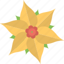 daisy, floral, flower, jamaica flower, nature icon