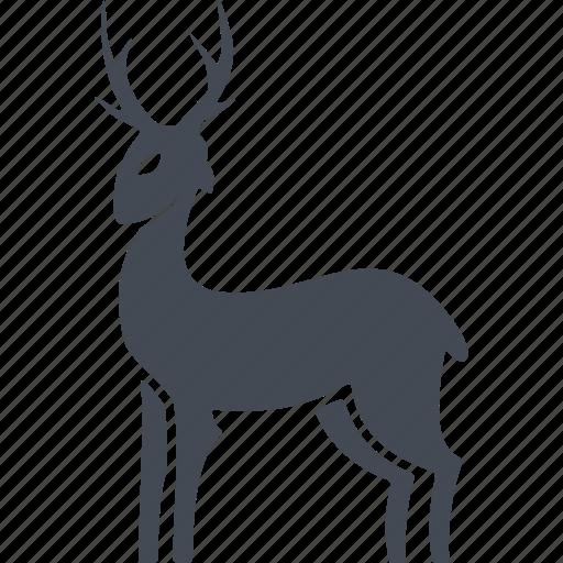 animal, christmas, deer, horns icon