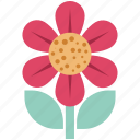 daisy, daisy flower, floral, flower, nature icon