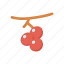 berry, cherry, food, fruit