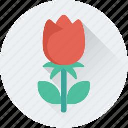 floral, flower, rose, rose bud, spring icon