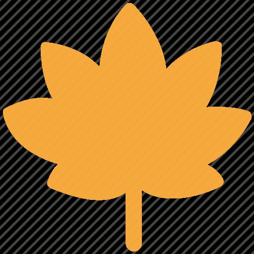 eco, ecology, leaf, nature icon