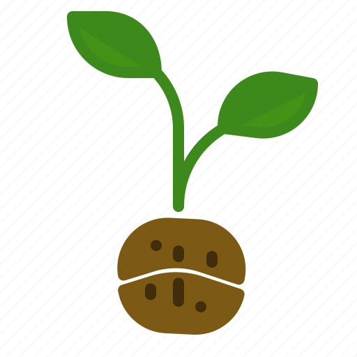 bean, coffee, grow, planting, seed, tree icon