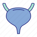 bladder, organ, urinary icon