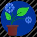 blue, flower, home, plant