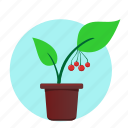 green, home, plant, rowan icon