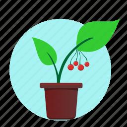 green, home, plant, rowan icon