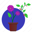 astra, flower, home, plant, violet icon