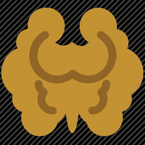 agriculture, food, foodstuff, kernel, nut, seed, walnut icon