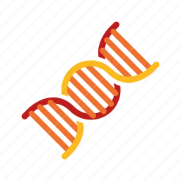 biology, dna, genome, research, science, strand icon
