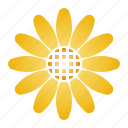 bloom, daisy, flower, innocence, yellow icon