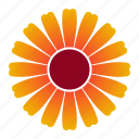 bloom, flower, orange, zinnia icon