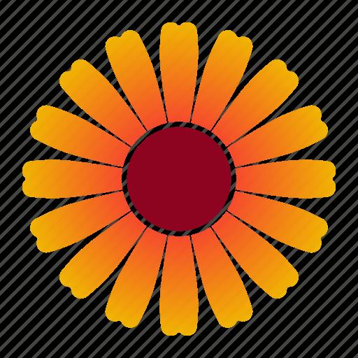Zinnia, flower, orange, bloom icon