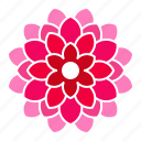 bloom, dahlia, flower, pink icon