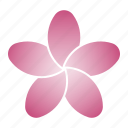 bloom, flower, pink, porcelain icon