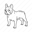 boston, boston terrier, bulldog, dog, french, french bulldog, terrier icon