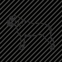american bulldog, bulldog, dog, large dog, medium land mammal, puppy icon
