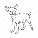 chihuahua, chiwawa, dog, medium land mammal, mexican dog, small dog icon