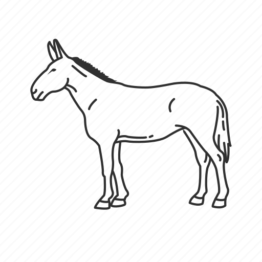 asinus, ass, donkey, equidae, horse, large land mammal icon