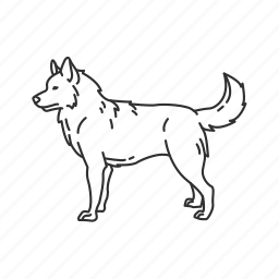dog, husky, medium land mammal, pets, puppy, sled dog, wolf icon
