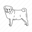 chinese pug, dog, pet, pug, puggle, puppy, small land mammal icon
