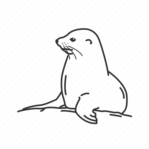 aquatic mammal, baby seal, happy seal, mammal, pinnipeds, sea lion, seal icon