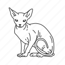 cat, sphynx, domestic cat, house cat, kitten, pet, small land mammal icon