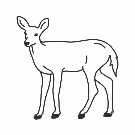 Baby deer, cervidae, deer, doe, domestic deer, female deer, medium land mammal icon - Download on Iconfinder