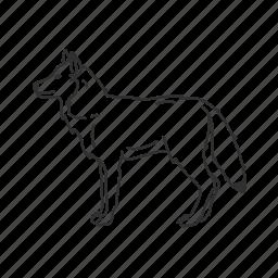 coyote, dog, gray wolf, grey wolf, medium land mammal, timber wolf, wolf icon