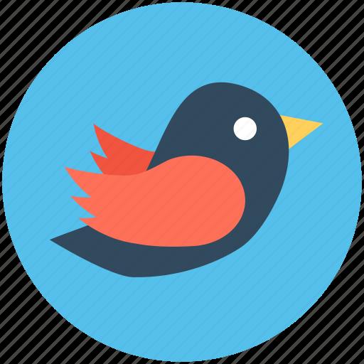 logotype, network, social media, social network, twitter logo icon