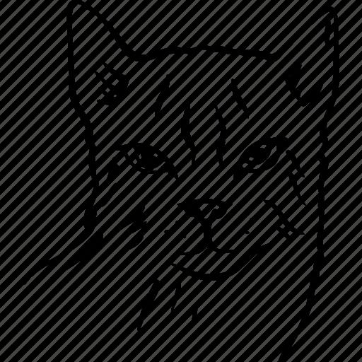 animal, cat, head, kitty, pet, tomcat icon