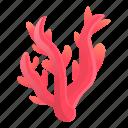 beach, coral, ocean, red